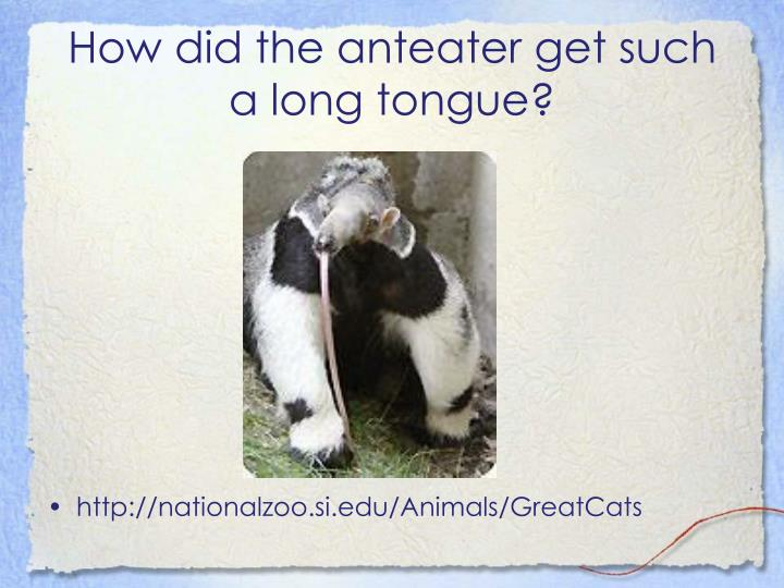 How did the anteater get such a long tongue
