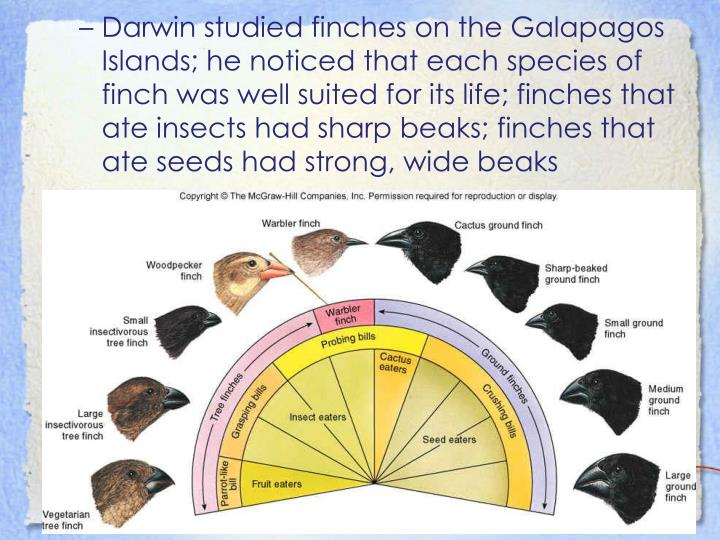 Darwin studied finches on the Galapagos Islands; he noticed that each species of finch was well suited for its life; finches that ate insects had sharp beaks; finches that ate seeds had strong, wide beaks