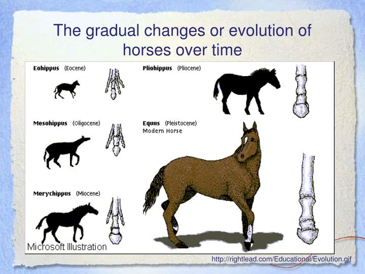 The gradual changes or evolution of horses over time