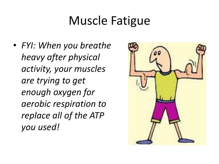 atp and muscle fatigue