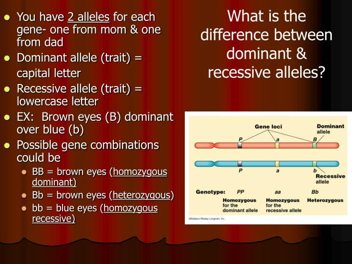 What is the difference between dominant & recessive alleles?