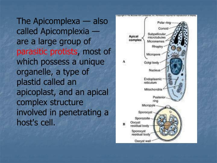 The Apicomplexa — also called Apicomplexia — are a large group of
