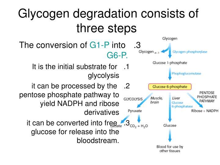 Glycogen degradation consists of three steps
