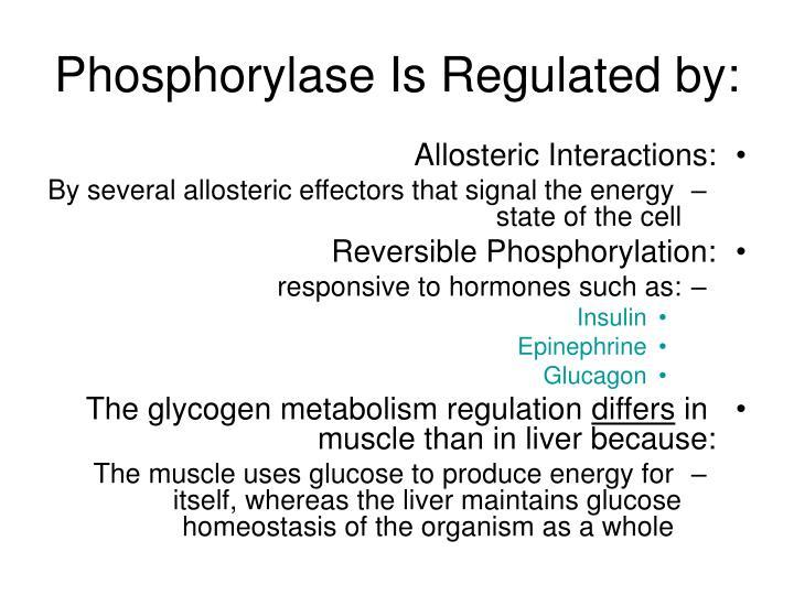 Phosphorylase Is Regulated by: