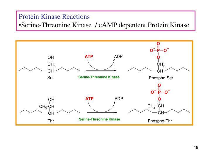 Protein Kinase Reactions