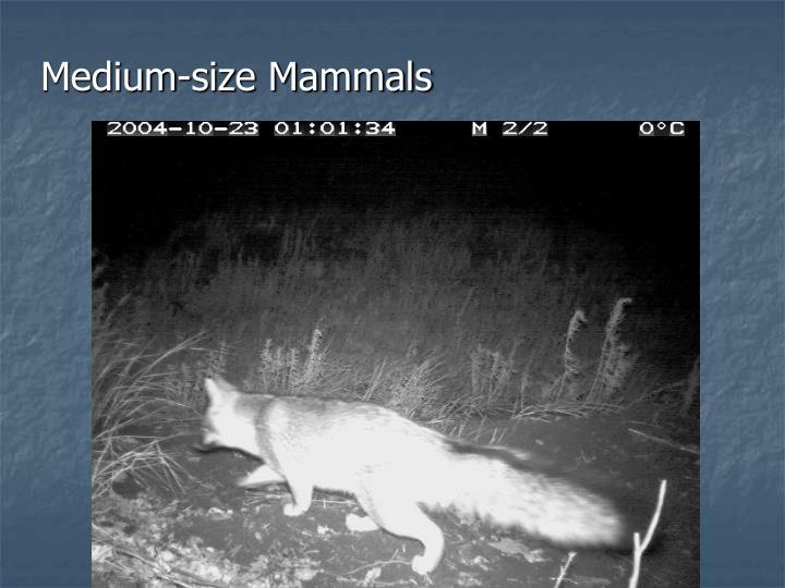 Medium-size Mammals