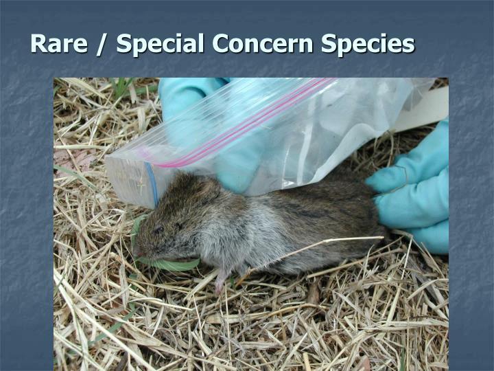 Rare / Special Concern Species