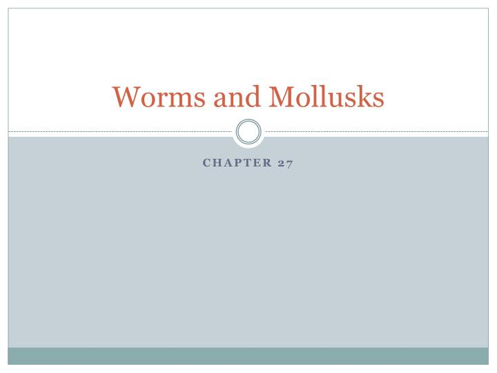 worms and mollusks n.