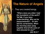 the nature of angels2