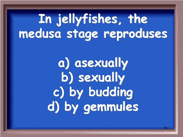 In jellyfishes, the medusa stage reproduses