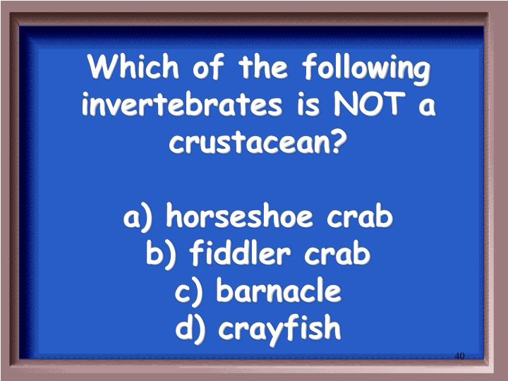 Which of the following invertebrates is NOT a crustacean?