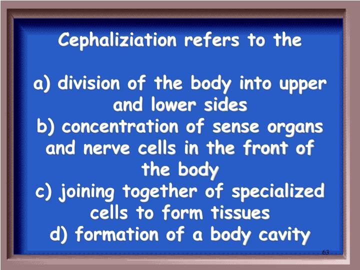 Cephaliziation refers to the