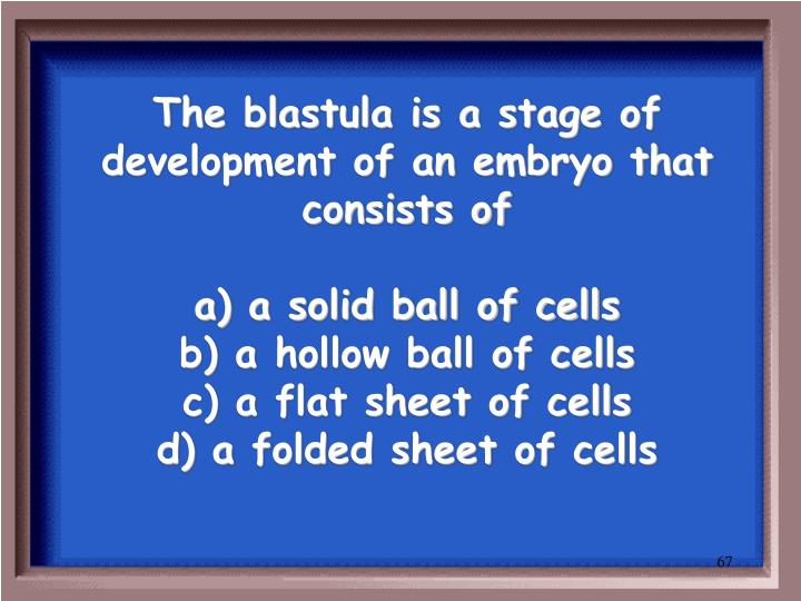 The blastula is a stage of development of an embryo that consists of