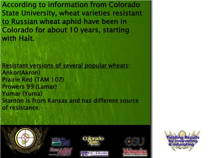 According to information from Colorado State University, wheat varieties resistant to Russian wheat ...