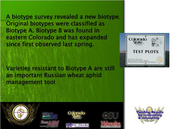A biotype survey revealed a new biotype. Original biotypes were classified as Biotype A. Biotype B was found in eastern Colorado and has expanded since first observed last spring.