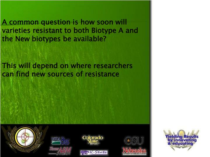A common question is how soon will varieties resistant to both Biotype A and the New biotypes be available?