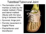 talotibial talocrural joint