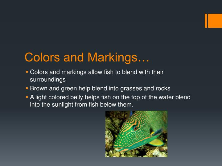 Colors and Markings…