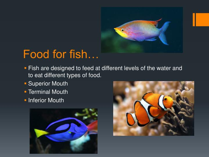 Food for fish…