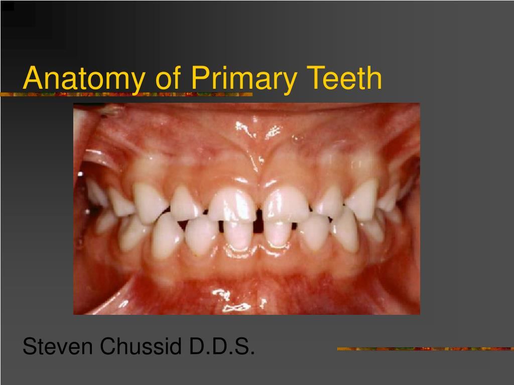 PPT - Anatomy of Primary Teeth PowerPoint Presentation - ID:5491899