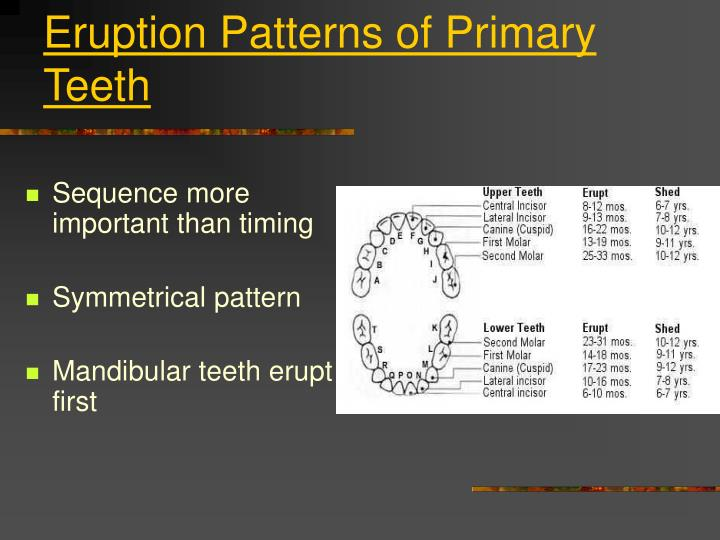 Ppt Anatomy Of Primary Teeth Powerpoint Presentation Id5491899