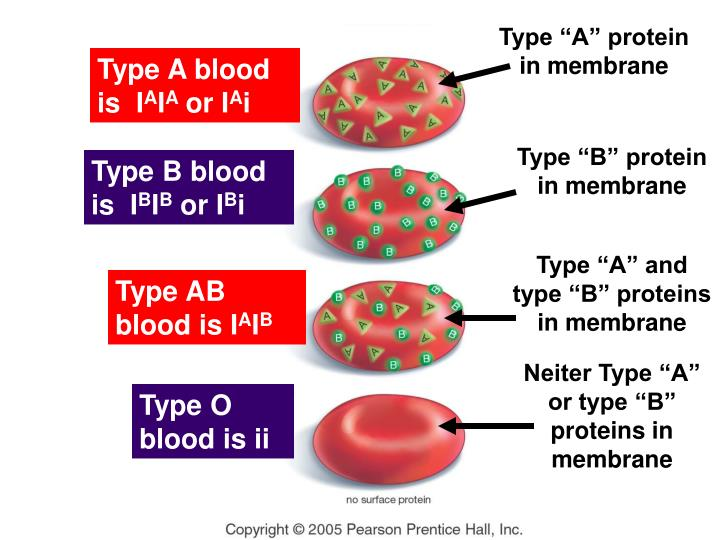 "Type ""A"" protein in membrane"