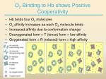o 2 binding to hb shows positive cooperativity