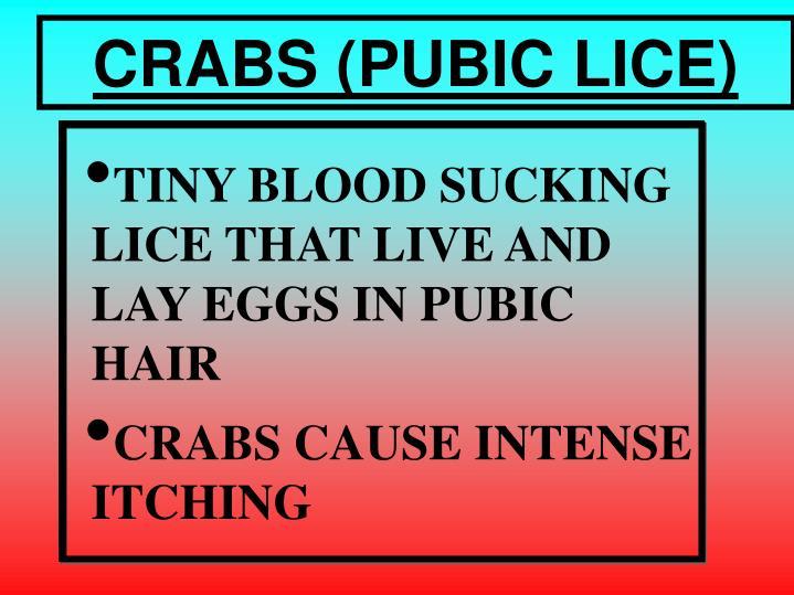 CRABS (PUBIC LICE)