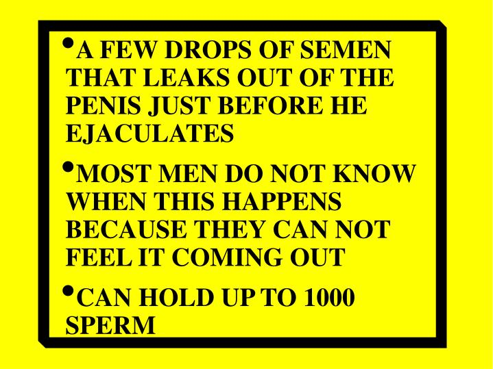 A FEW DROPS OF SEMEN THAT LEAKS OUT OF THE PENIS JUST BEFORE HE EJACULATES