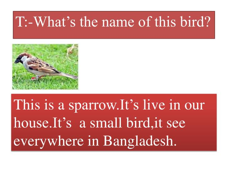 T:-What's the name of this bird?
