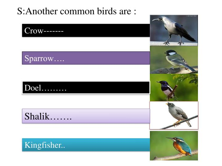 S:Another common birds are :
