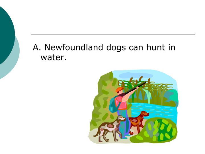 A. Newfoundland dogs can hunt in water.