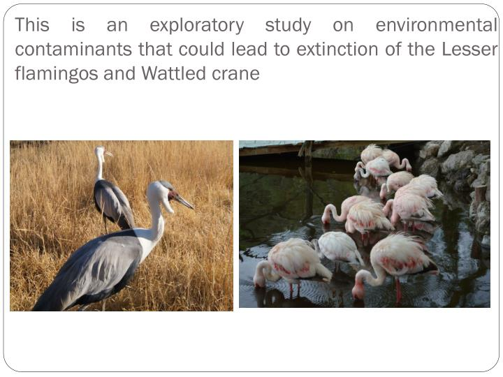 This is an exploratory study on environmental contaminants that could lead to extinction of the Lesser flamingos and Wattled crane