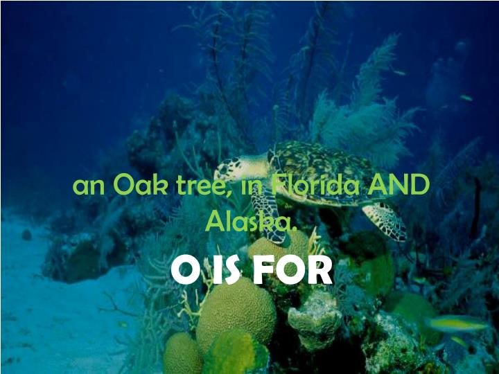 an Oak tree, in Florida AND Alaska.