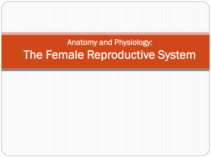 PPT - Anatomy and Physiology: The Female Reproductive System ...