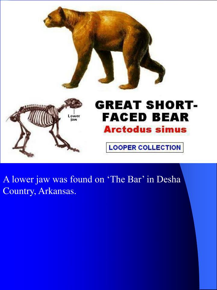 A lower jaw was found on 'The Bar' in Desha Country, Arkansas.