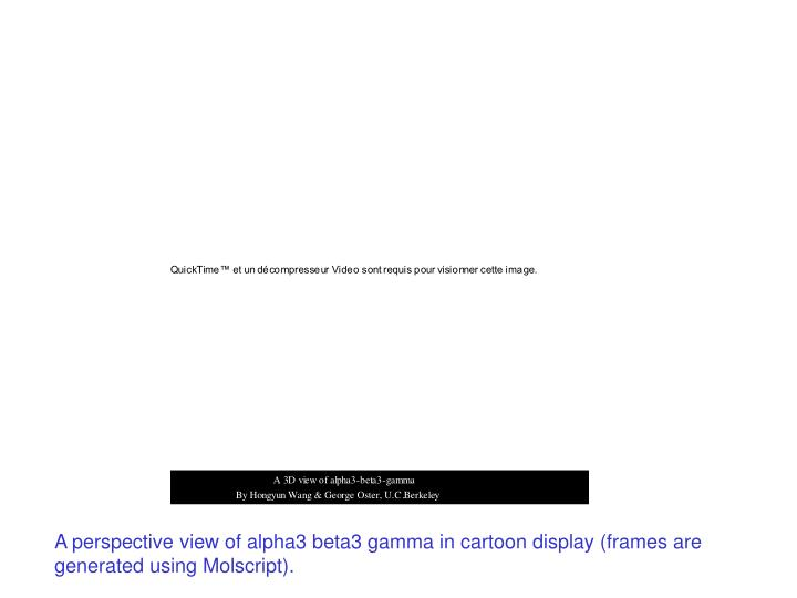 A perspective view of alpha3 beta3 gamma in cartoon display (frames are generated using Molscript).