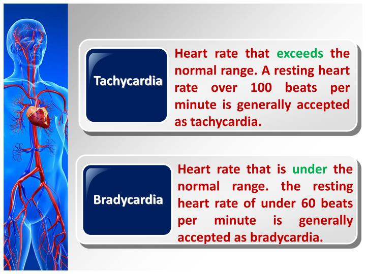 outline for cardiovascular powerpoint Circulatory system text b - powerpoint the circulatory system makes large-scale multicellularity possible it provides a means of conveying nutrients and oxygen to and wastes out of the internal cells that make-up our bodies.