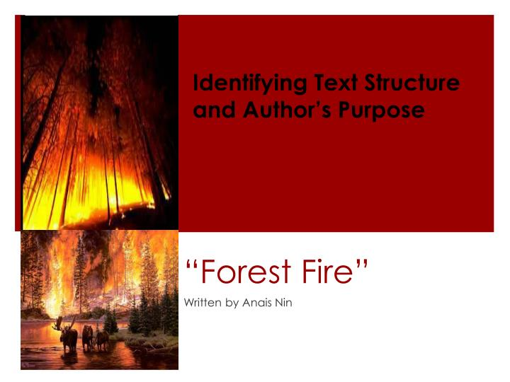 forest fire n.