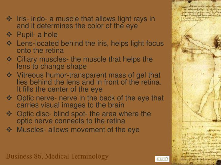 Iris- irido- a muscle that allows light rays in and it determines the color of the eye