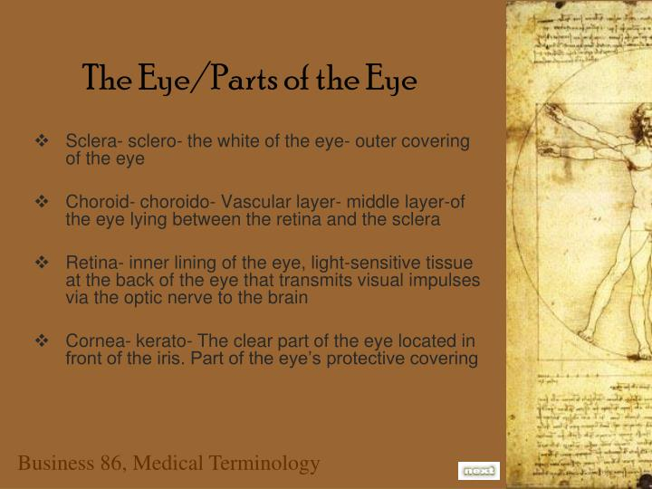 The eye parts of the eye