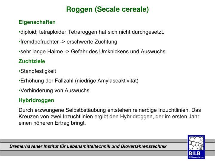 Roggen (Secale cereale)