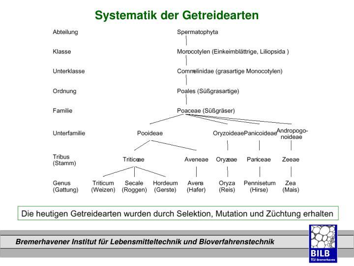 Systematik der Getreidearten