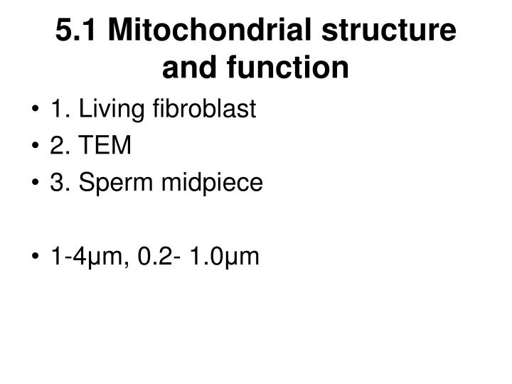 Ppt 5 1 Mitochondrial Structure And Function Powerpoint