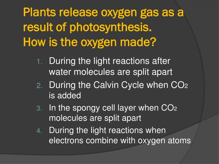 Plants release oxygen gas as a result of photosynthesis.