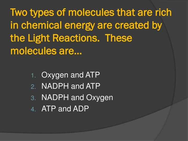 Two types of molecules that are rich in chemical energy are created by the Light Reactions.  These molecules are…