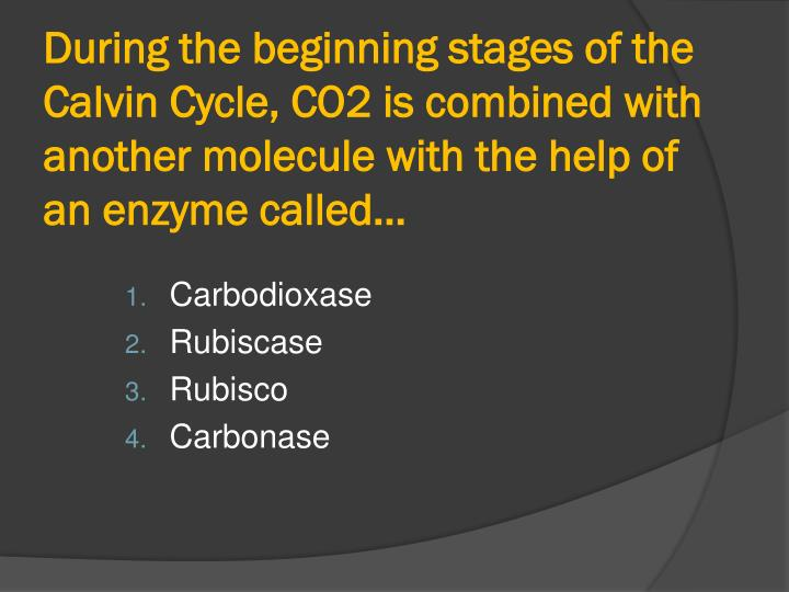 During the beginning stages of the Calvin Cycle, CO2 is combined with another molecule with the help of an enzyme called…