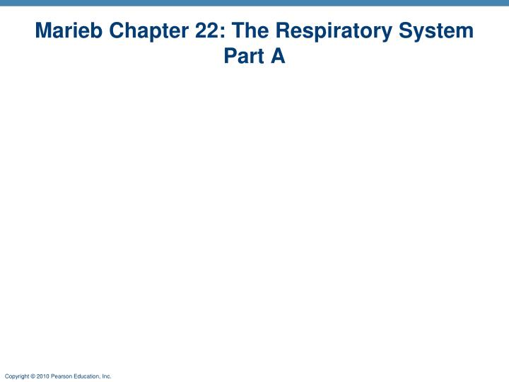 PPT Marieb Chapter 22 The Respiratory System Part A