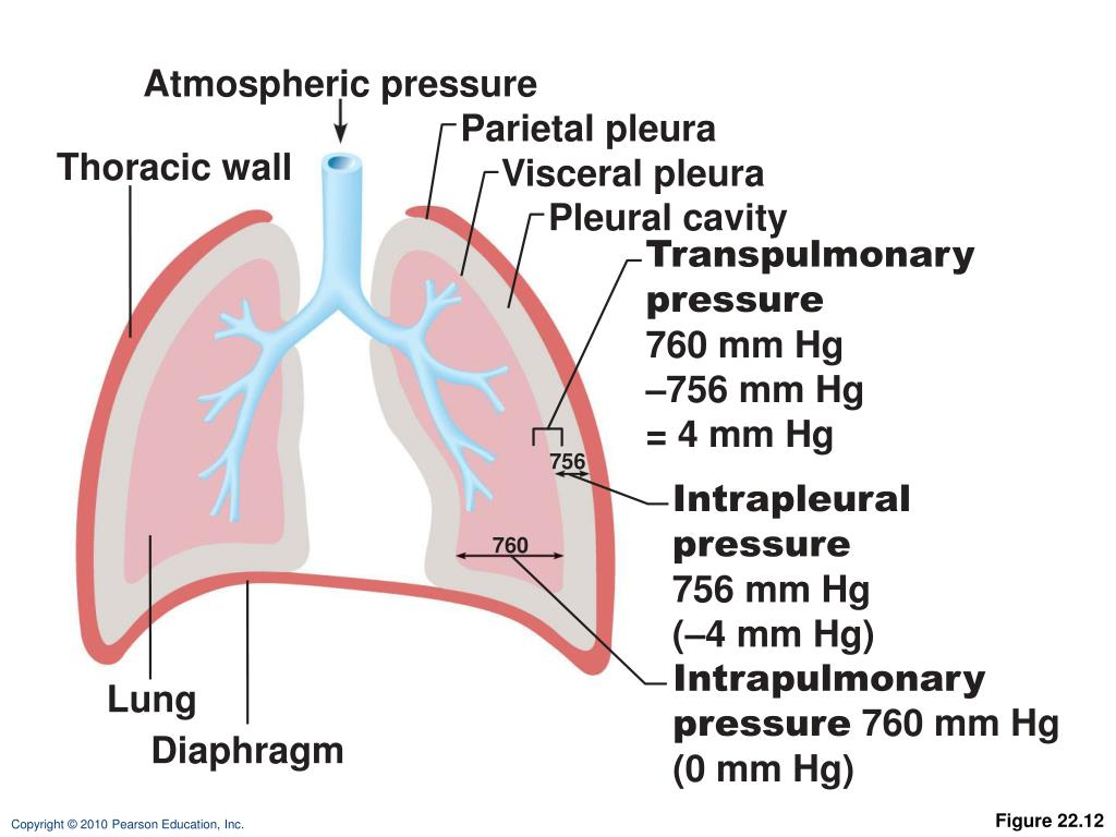 what happens when pressure in the chest cavity
