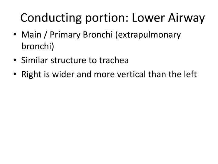 Conducting portion: Lower Airway